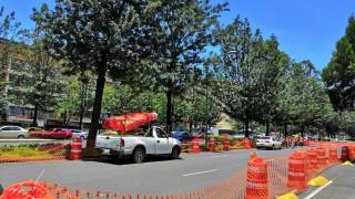 Arranca Gobierno de la Ciudad de México rehabilitación y reforestación de Avenida Chapultepec