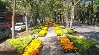 Adorna Cempasúchil principales avenidas de la Ciudad de México